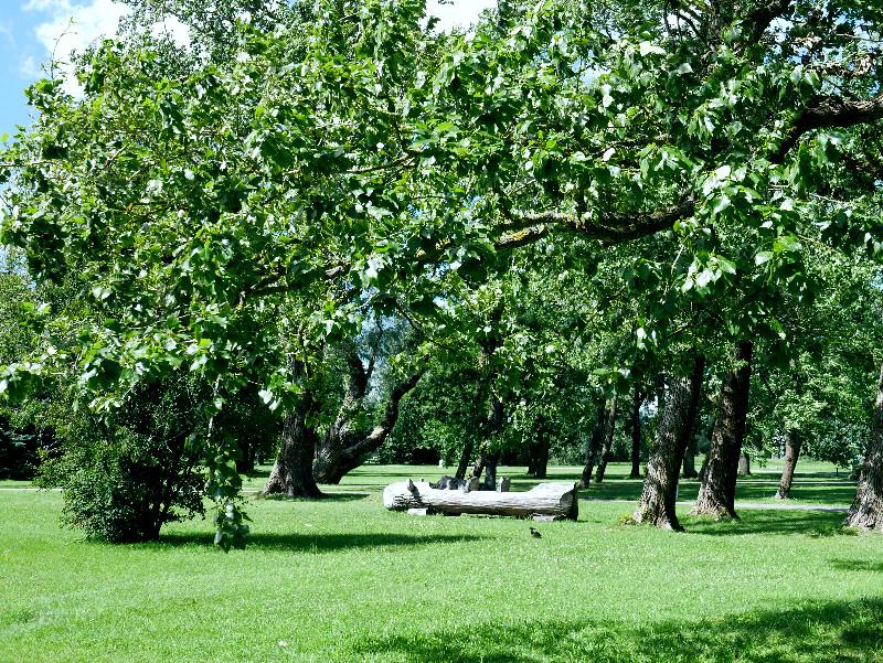 pärnu puisto